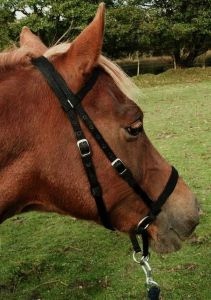 Dr Cook Bitless Bridle Nylon