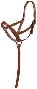Tory Leather Foal Slip Halter with Grab Strap