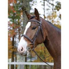 Shires Ocala Bridle by Avignon