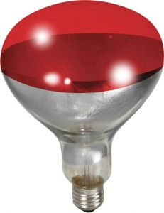 Little Giant Heat Lamp Bulb